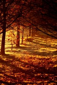 Tree Shadows At Dawn